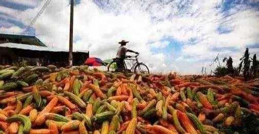 拜托!请别再折腾农业了,农民们伤不起......